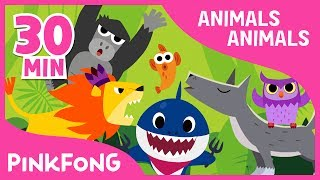 Animals, Animals | Baby Shark And More | +Compilation | Animal Songs |  Pinkfong