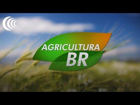 Programa Agricultura BR - 21/02/2019