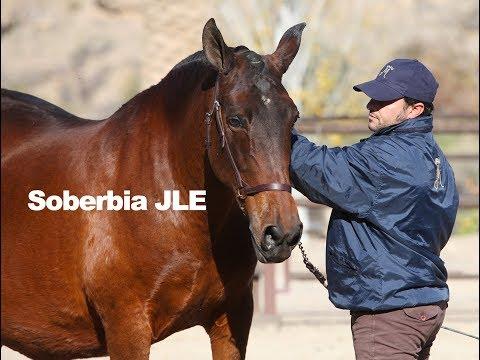 Brood Mare - Soberbia JLE (Trabajo a la mano-Dic-2018)
