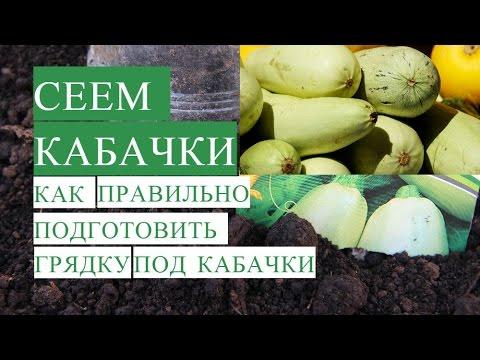 Посадка Кабачков. Как Правильно Подготовить Грядку для Кабачков.