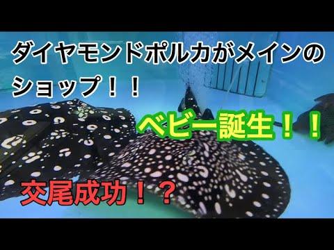 ダイヤモンドポルカ専門店!