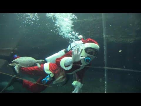 العرب اليوم - شاهد: سانتا كلوز يجذب انتباه زوار حوض أسماك في اليابان