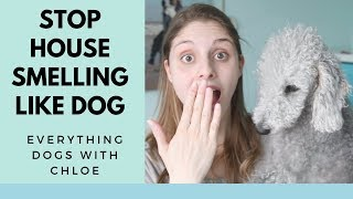 MY HOUSE SMELLS LIKE DOG - HOW TO STOP THIS