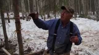 How To Judge The Size Of A Black Bear (Barrel And Beaver Methods)