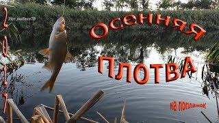 Рыбалка в октябре на поплавочную удочку плотвы