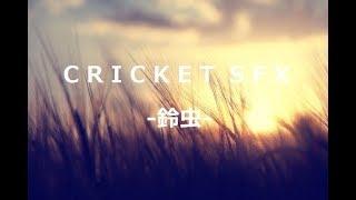 【新作効果音】CRICKET SFX -鈴虫- 販売開始!