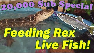 Feed My Pet Friday: My Alligator Hunts for Fish!