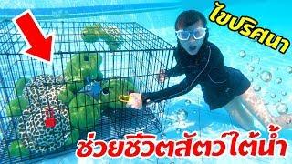 บรีแอนน่า | 🐢 ไขปริศนาช่วยชีวิตสัตว์ใต้น้ำ บรีแอนน่าจะทำภารกิจสุดท้าทายนี้ได้หรือไม่? ลุ้นกัน!!