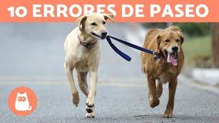 10 errores comunes al pasear con tu perro   Kholo.pk