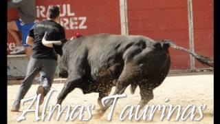 preview picture of video 'Encierro y capea Velilla San Antonio 24-9-2012.'