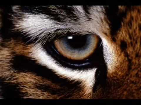 Eye Of The Tiger Techno Remix Mp3