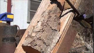 Learn To Carve Wood Spirits With Power 1 Debarking