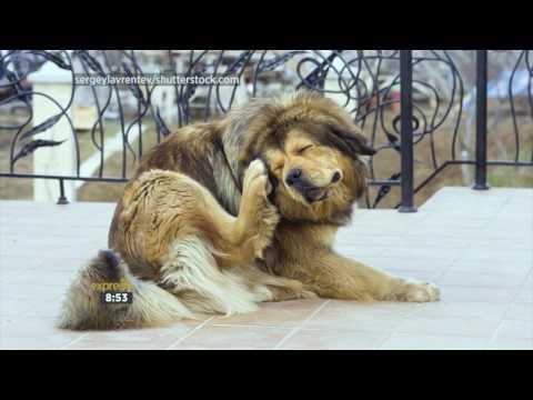Tratamiento giardia y coccidia en perros