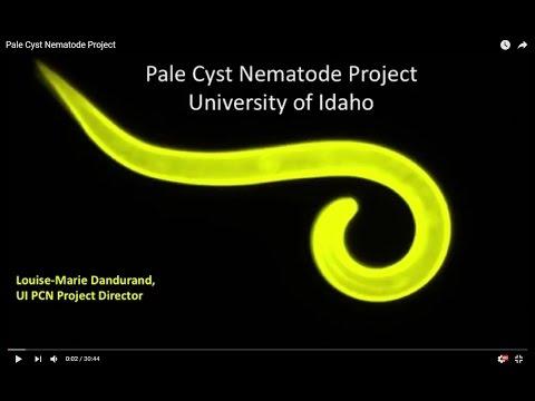 , title : 'Pale Cyst Nematode Project