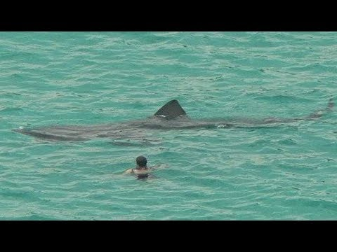 MEGA-SHARKS FILMED BY TOURISTS