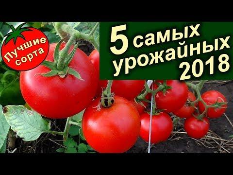 Самые Урожайные Семена Томатов (лучшие сорта томатов)