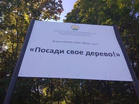 В рамках акции «Посади свое дерево» журналисты посадили аллею