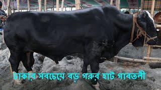 Biggest Cow Haat In Dhaka Gabtoli 2018 🐂 ঢাকার সবচেয়ে বড় কোরবানির গরুর হাট 🔥 গাবতলী !!