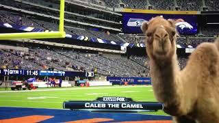 Hump Day Camel मफत ऑनलइन वडय