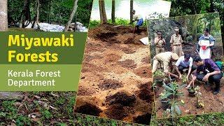 Miyawaki Forests developed for Kerala Forest Department