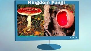 Kingdom Fungi Characteristics