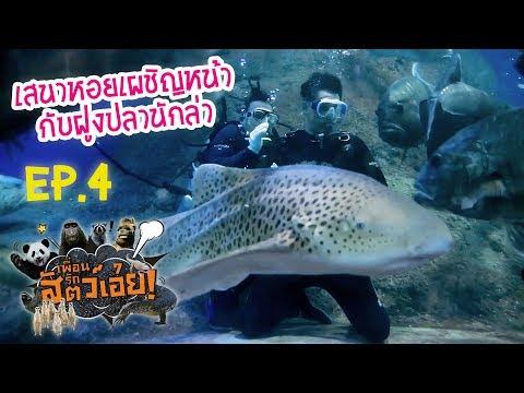เสนาหอยเผชิญหน้ากับฝูงปลานักล่า-เพื่อนรักสัตว์เอ๊ย l EP.4 l 15 มิ.ย.60