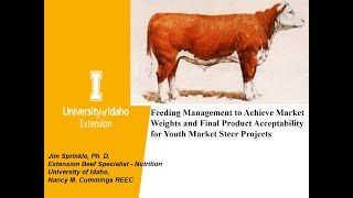 Feeding Market Steers
