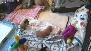 Tickling Tummy Adele Pups