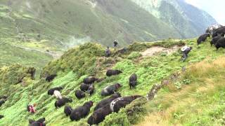 preview picture of video '108 Yaks - A journey of love and freedom'