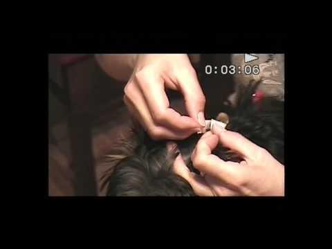 Fitoestrogeny z łysieniem