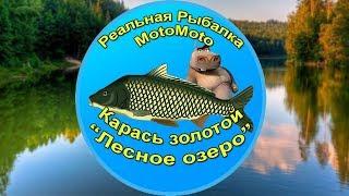 Как поймать карася в реальной рыбалке