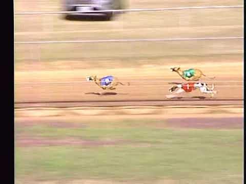 Race 31