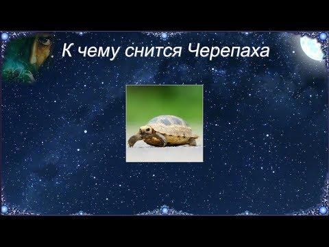 К чему снится Черепаха (Сонник)