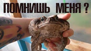 Место жабы - в теплице! Ужа - на навозной куче)))