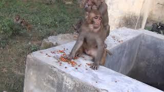 Vanar bhoj sadhu shisya dipesh mishra dawara