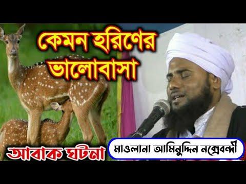 কেমন হরিণের ভালোবাসা।আবাক ঘটনা।মাও: আমিনুদ্দিন রেজাভী।Bangla new waz ।2020এর।Mawlana Aminuddin Rejvi
