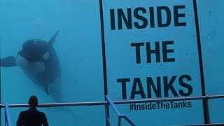 Inside The Tanks (Full Documentary)