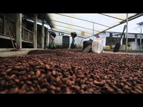 Chocolate ecológico con aroma de rosa andina Pacari
