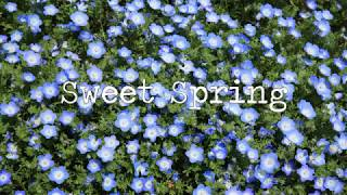 Sweet Spring  [ Lofi / Jazz hop / Chill Hop ]