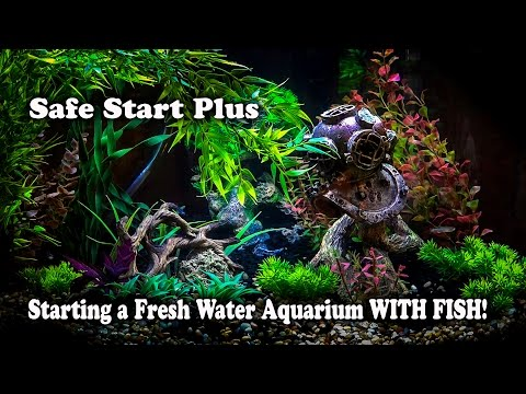 How to setup a Freshwater Fish Tank WITH Fish in it SafeStart No Waiting.