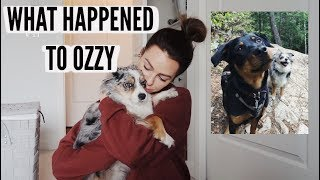 What Happened To Our Dog + Weekly Vlog
