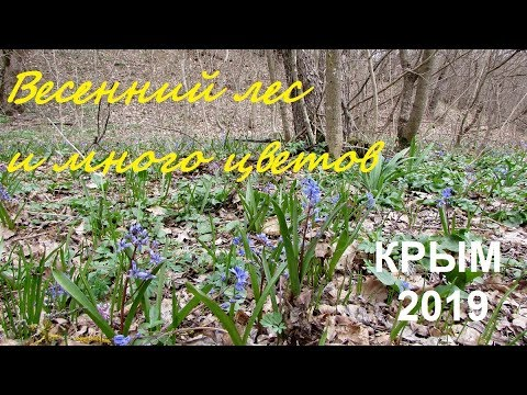 Весеннее настроение цветы в лесу под Судаком. Крым 2019