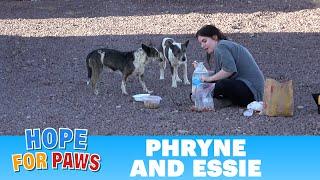 Dog rescue on the California, Arizona and Nevada border - stressful, but successful! ❤️👍