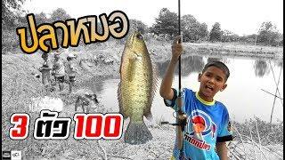 กุ้งฝอย ตกปลาหมอ 3 ตัวร้อย | เด็กตกปลา