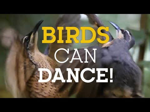 As aves também sabem dançar, e muito bem!