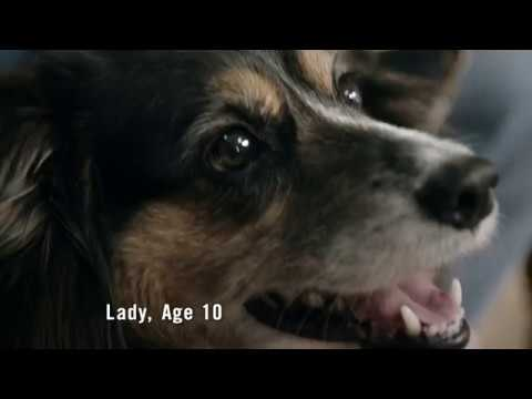 Purina® Pro Plan® Bright Mind™ Adult 7+ TV Commercial – Lady :15