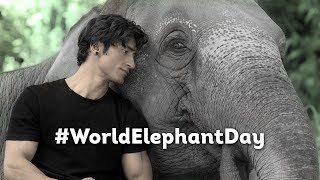 #WorldElephantDay | Vidyut Jammwal | Junglee In Cinemas 5th April 2019