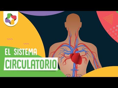 Una presión arterial de un niño 10-11 años