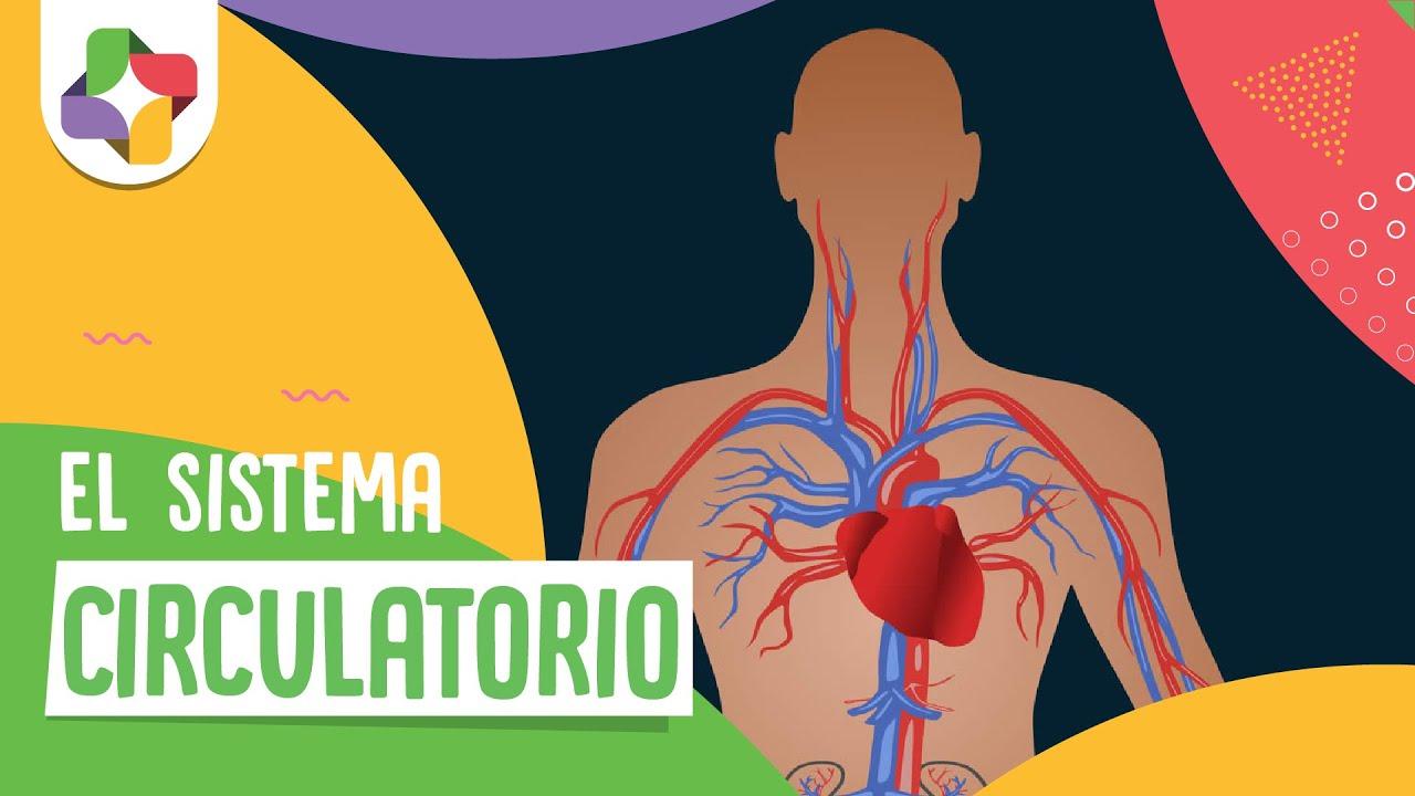 Educatina - El Sistema Circulatorio