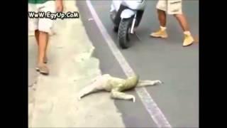 Смотреть онлайн Странное неопознанное животное на дороге